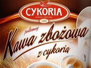 Cykoria. Kawa zbożowa Cykoria