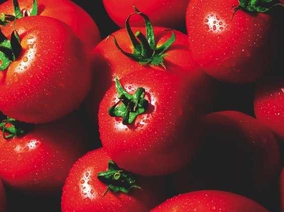 Pomidorowe eldorado
