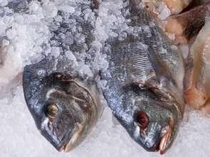 Frosta: Kategoria ryb mrożonych lekko w górę