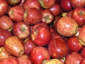 Polskie jabłka coraz bliżej amerykańskiego rynku