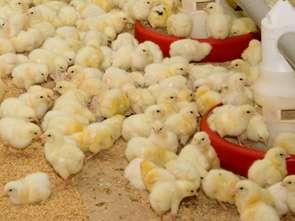 Promocja drobiu z Europy w Azji za ponad 4 mln euro