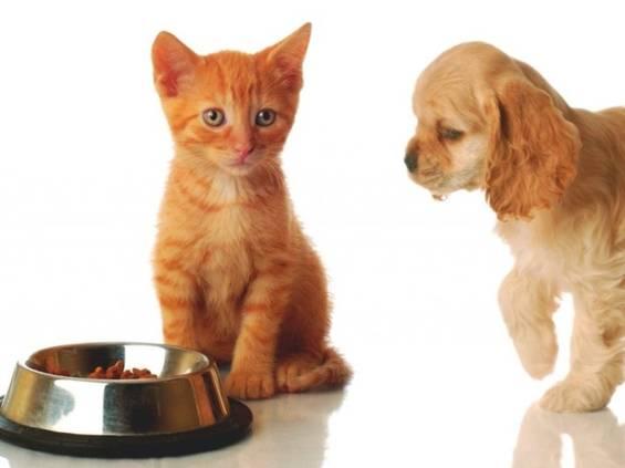 Rynek karmy dla zwierząt może wzrosnąć 2-3-krotnie