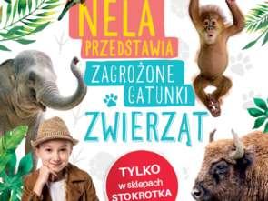 Nela, mała reporterka, w akcji ze Stokrotką
