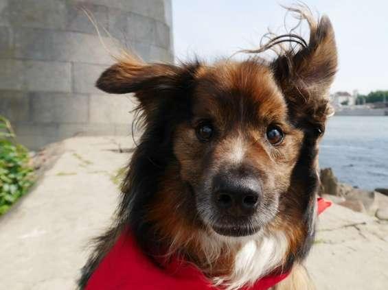 Carrefour zachęca do adopcji psów