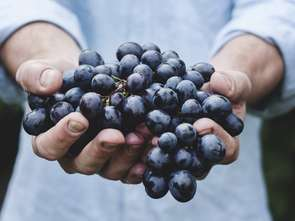 Mołdawscy dostawcy winogron chcą zwiększyć eksport do Polski