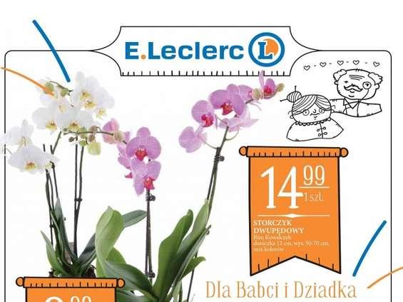 E.Leclerc z nowym formatem gazetek