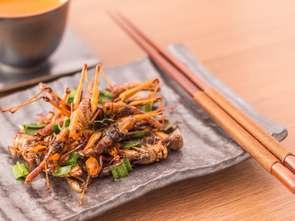 Sklepy będą mogły sprzedawać jedzenie z owadów