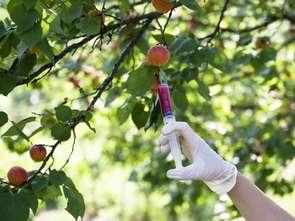 Polska nie jest krajem wolnym od GMO