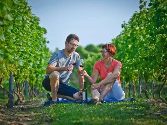W poszukiwaniu polskiego wina, czyli Winnica Płochockich