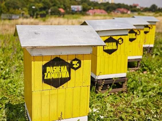 Tarasy Zamkowe przyjazne dla pszczół