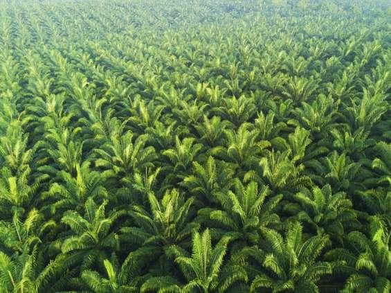 Oshee bez oleju palmowego