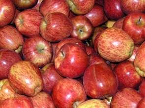 Jabłka kością niezgody