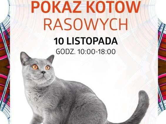 Silesia City Center opanują koty