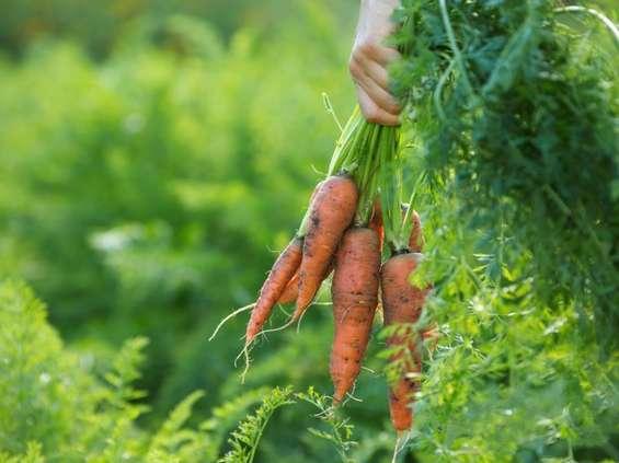 Ubywa gospodarstw ekologicznych