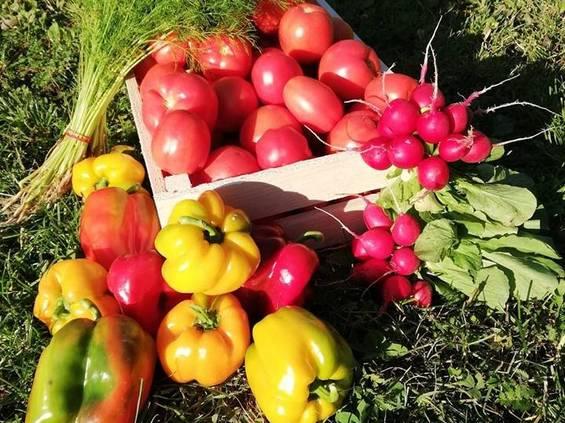 Carrefour wspiera rolnictwo ekologiczne