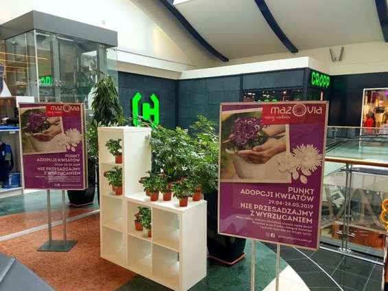 Galeria Mazovia z Punktem Adopcji Kwiatów