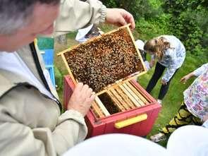 Galeria Solna z pszczołami