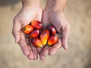 Powstała pierwsza Polska Koalicja ds. Zrównoważonego Oleju Palmowego