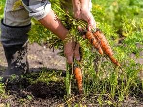Uprawy eko w Polsce wciąż są niszą