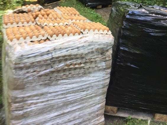 Nadleśnictwo Kudypy i tysiące zepsutych jaj