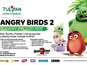 Angry Birds w Tulipanie