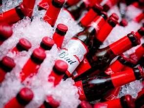 Piwo Bud debiutuje w Polsce