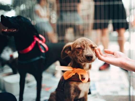 Galeria Młociny wspiera schronisko dla zwierząt
