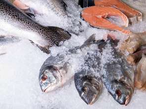 Super ZOO: karma dla zwierząt z certyfikowanych połowów
