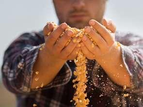 PIE: koronawirus nie wpłynął na spowolnienie sektora rolnego