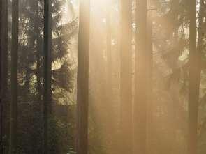 Natura &Co deklaruje zerową emisję dwutlenku węgla do 2030 roku