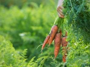 Żywność ekologiczna smakuje coraz bardziej