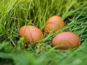 Producenci jaj też czekają na otwarcie gastronomii