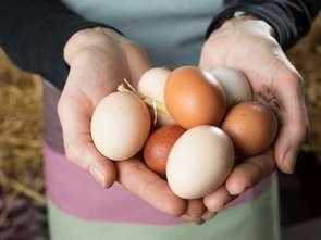 Kaufland wcześniej wycofuje jaja