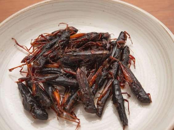 Przekąski z owadów kupisz w automacie