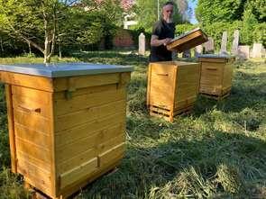 Aldi chroni pszczoły, IKEA też