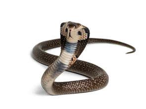 Służby na nogach, wąż w markecie!