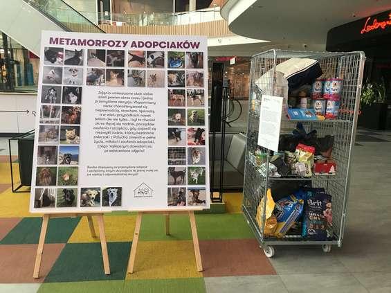 Galeria Młociny apeluje o adopcję zwierząt ze schronisk