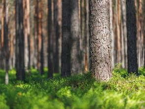 Lasy Państwowe zbudują sieć sklepów